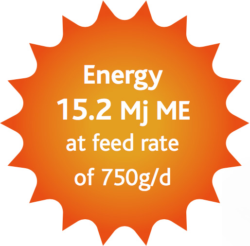 GOLDEN MAVERICK ® Energy Info